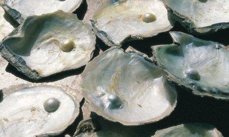 Ostras con sus respectivas perlas